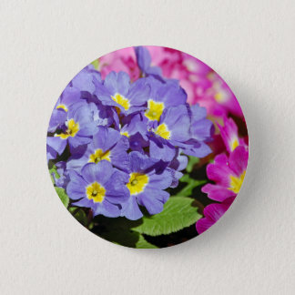 Pink and purple primroses 6 cm round badge