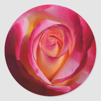 Pink and Red Rose with Yellow Highlights Classic Round Sticker