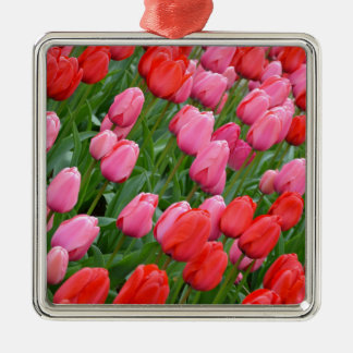 Pink and red spring tulips ornaments