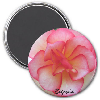 Pink and White Begonia Magnet