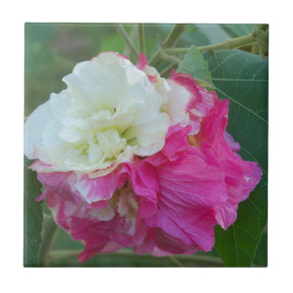 pink and white changeable hibiscus bloom ceramic tile