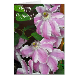 Pink and white clematis flowers card
