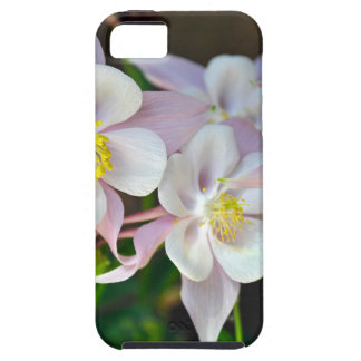 Pink and white columbine flowers case for the iPhone 5