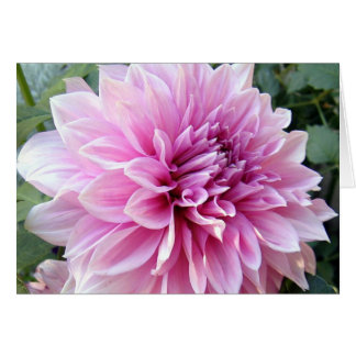 Pink and White Dahlia Card