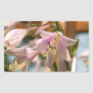 Pink and White Hosta Flowers in Bloom Rectangular Sticker
