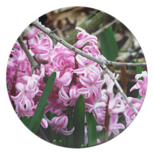 Pink and White Hyacinth Flowers Plate