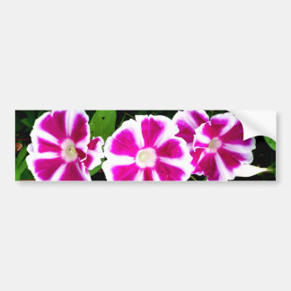 Pink and White Morning Glory Flowers Bumper Sticker