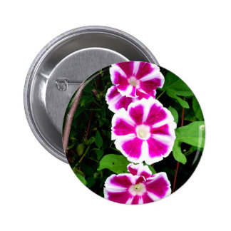 Pink and White Morning Glory Flowers Buttons