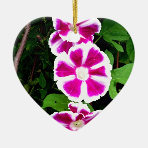 Pink and White Morning Glory Flowers Ornaments