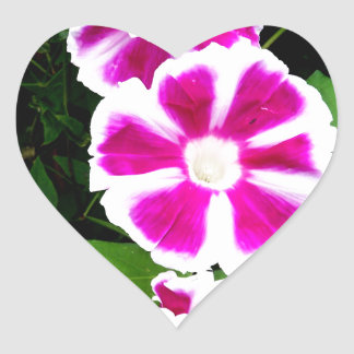 Pink and White Morning Glory Flowers Heart Sticker