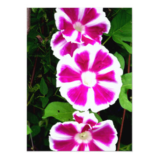 Pink and White Morning Glory Flowers Custom Invites