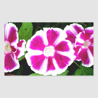 Pink and White Morning Glory Flowers Rectangle Sticker