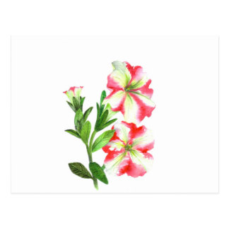 Pink and White Petunias Floral Art Postcard