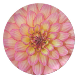 Pink and yellow dahlia flower blossoms plate