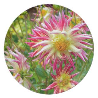 Pink and yellow dahlia flowers plates