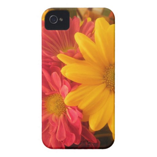 Pink and Yellow Daisies Blackberry Bold Blackberry Bold Covers