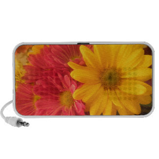 Pink and Yellow Daisies iPhone Speaker
