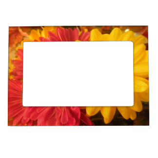 Pink and Yellow Daisies Photo Frame Magnets
