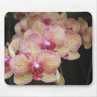 Pink and Yellow Moth Orchid Mousepad