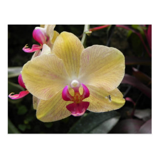 Pink and Yellow Orchid Post Card