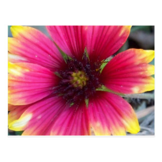 Pink and Yellow Wildflower Postcard