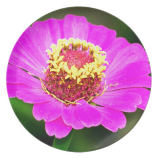 Pink and Yellow Zinnia Flower Dinner Plate
