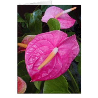 Pink Anthuriums Card