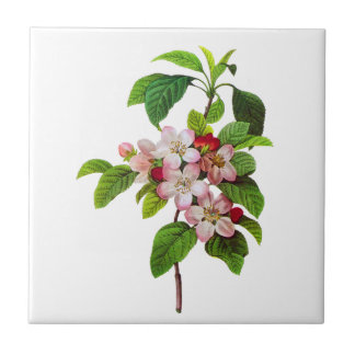Pink Apple Blossoms by Pierre Jopseph Redoute Ceramic Tile
