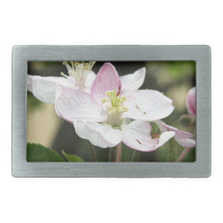 Pink apple flower in spring . Tuscany, Italy Belt Buckle