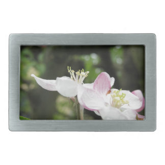 Pink apple flower in spring . Tuscany, Italy Belt Buckles