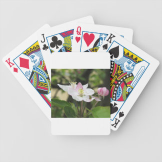 Pink apple flower in spring . Tuscany, Italy Bicycle Playing Cards