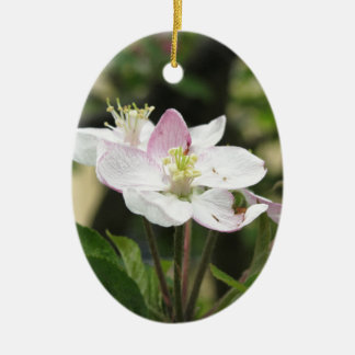 Pink apple flower in spring . Tuscany, Italy Ceramic Ornament