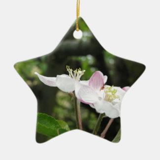 Pink apple flower in spring . Tuscany, Italy Ceramic Star Decoration