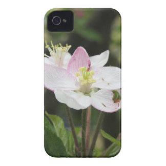 Pink apple flower in spring . Tuscany, Italy iPhone 4 Cases