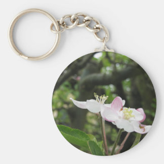 Pink apple flower in spring . Tuscany, Italy Key Ring
