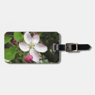 Pink apple flower in spring . Tuscany, Italy Luggage Tag