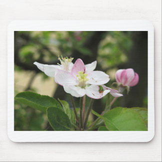 Pink apple flower in spring . Tuscany, Italy Mouse Pad