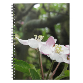 Pink apple flower in spring . Tuscany, Italy Notebook