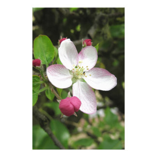 Pink apple flower in spring . Tuscany, Italy Personalized Stationery