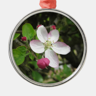 Pink apple flower in spring . Tuscany, Italy Silver-Colored Round Decoration
