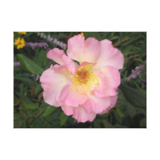 Pink Arizona Flower Canvas Print