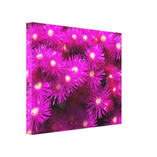 Pink Aster Flowers Gallery Wrap Canvas