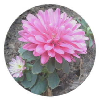 Pink Aster Flowers Plate