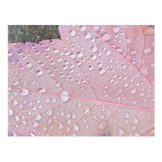 Pink Autumn Leaf Postcard