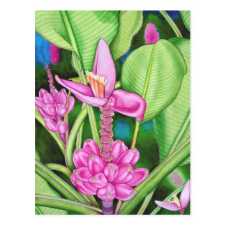 Pink Bananas Postcard