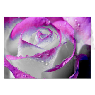 Pink Beauty Rose Card
