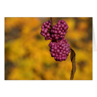 pink berries greeting card