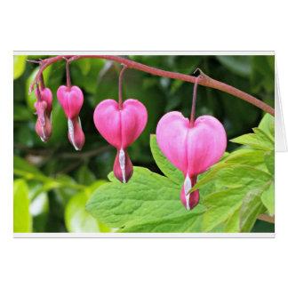 Pink bleeding hearts flower, blank greeting card