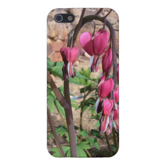 Pink Bleeding Hearts Flowers in Bloom iPhone 5 Cover