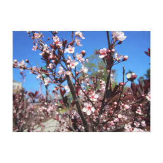 Pink Blossom Stretched Canvas Print